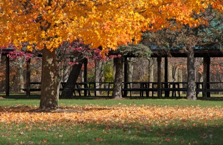 Fall tree losing its leaves in a community park in front of a picnic shelter
