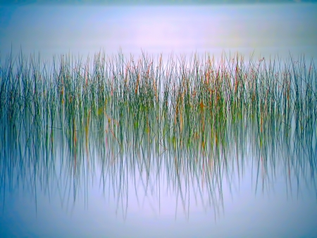 Reeds reflected in the waters of a foggy lake