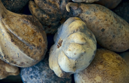 recently: A collection of pale, whitish gourds recently harvested