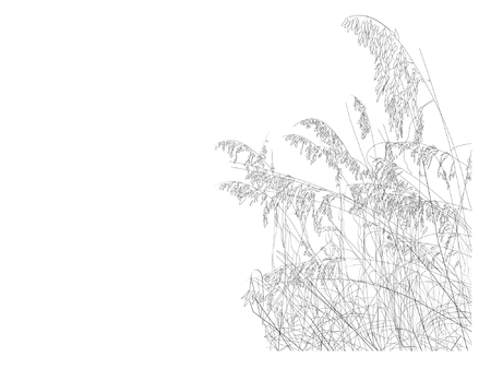 undergrowth:  A line drawing of sea oats on the beach