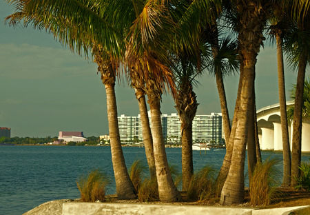 A photograph of the waterfront of Sarasota Florida and the Ringling Causeway across Sarasota Bay through the palm trees on Bird Key Stock Photo