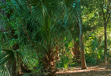 A photograph of a wooded tropical area containing hardwoods and palm trees through filtered sunlight Stock Photo