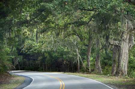A photograph of a curving highway on Edisto Island under a canopy of leaves and spanish moss