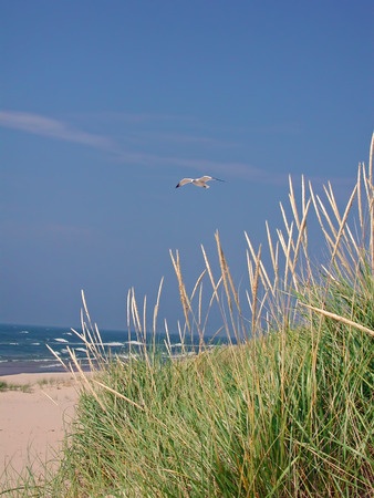 A photograph of a seagull flying over the beach and sea grass