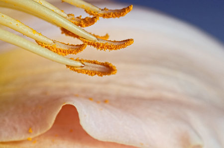 A macro photograph of the stamen of a daylily flower
