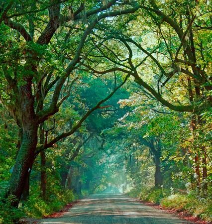 A photograph a foggy morning on Botany Bay Road on Edisto Island South Carolina Stock Photo