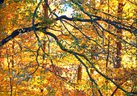 An Autumn colored woods backlit by sunshine