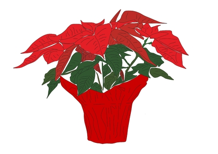 An illustration of a poinsettia plant in full bloom wrapped in red paper