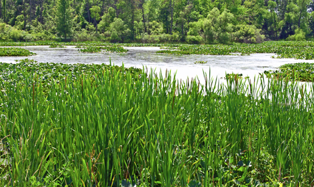 A photograph of a swampy marshy area of land in Michigan