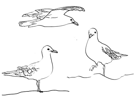 A black and white line sketch of sea gulls â?? two standing, one flying
