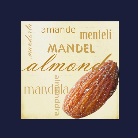 A photograph of an almond framed in dark blue surrounded by the word almond in several different languages. Stock Photo