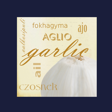 A photograph of a garlic bulb framed in dark blue surrounded by the word garlic in several different languages. Stock Photo