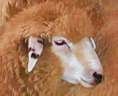 A digitally enhanced photo of a white-faced sheep