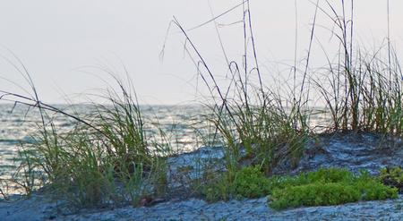 A photo of sea grass along the Gulf of Mexico beach near Bradenton Florida