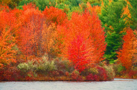 A photo of the brilliant colored autumn foliage on Lake Ovid at Sleepy Hollow State Park in Michigan Stok Fotoğraf