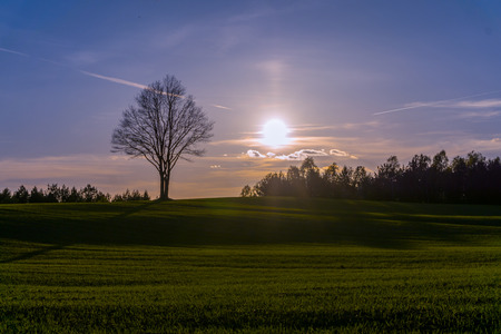 hilly: Sunset over the hilly field with lonely tree on horizon Stock Photo
