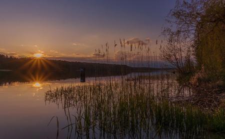 rushes: Sunset across lake
