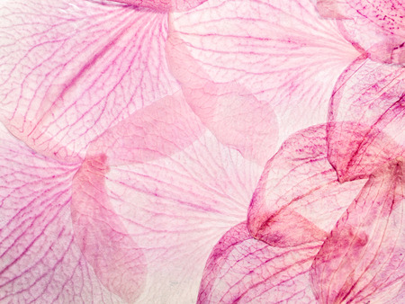 spa collage: Pink floral collage background