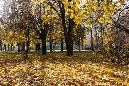 gossamer: Sunny day in autumn park. Indian summer, gossamer, martinmas summer. Horizontal image.