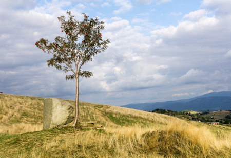 aucuparia: Mountain landscape with lonely rowan tree Sorbus aucuparia, mountain ash. Cloudy sky. Beskids Silesian, Poland. Stock Photo
