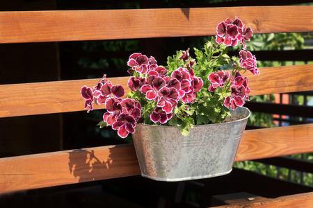 arbor: Purple petunias in tin pot hanging on wooden wall of arbor