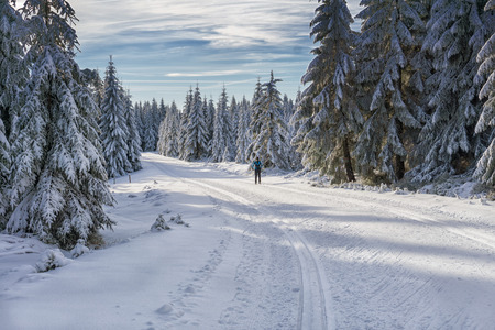 Road in mountains at winter in sunny day with single female cross-country skier. Trees covered with hoarfrost illuminated by the sun. Groomed ski trails for cross-country in Karkonosze, Giant Mountains, Poland.