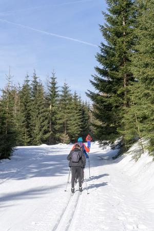 Group of cross-country Skiers runs on groomed ski track in sunny winter day. Winter mountain landscape: Jakuszyce, Jizera Mountains, Poland. Фото со стока