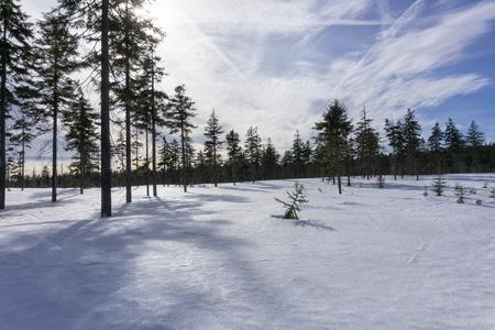 Winter mountain landscape with blue sky in sunny day. Jizera Mountains, surroundings of Jakuszyce, Poland. Фото со стока