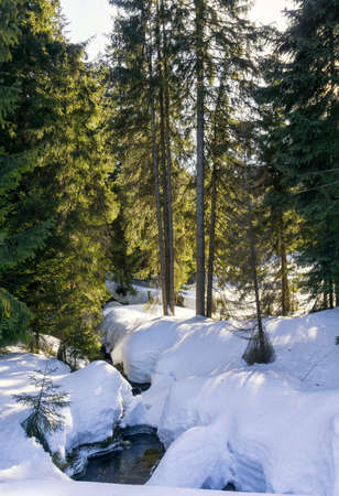 Stream flowing through a thick cover of snow in the Jizera Mountains, Czech Republic, Europe. Winter mountain landscape.