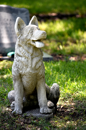 Cemetery headstone furry friend dog sitting over owner grave.