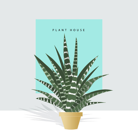 Hand drawn house plants. Scandinavian style illustration, modern and elegant home decor. Vector design flowers.