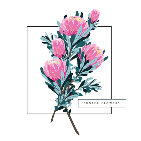 Set of floral vintage hand drawn protea, wildflowers, leaves branches flowers, botanical hand drawn illustration isolated on light white background  イラスト・ベクター素材