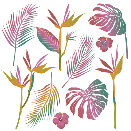 Set of vector of tropical flowers, leaves,  South America, Central Africa, Southeast Asia and Australia. Monsoon forests, Mangroves.For textiles Çizim