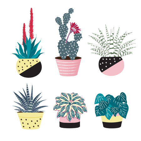 Cactus with flower and aloe vera in colorful pots isolated on white background. Set of cacti. Potted plants with prickles for home interior.