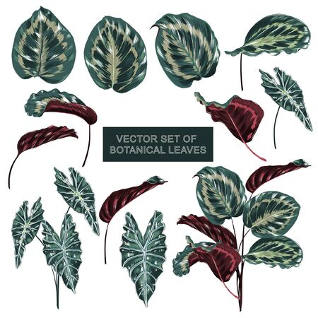 Set of Botanical plants in exotic forest  in vector hand drawn design on white background Stock Illustratie