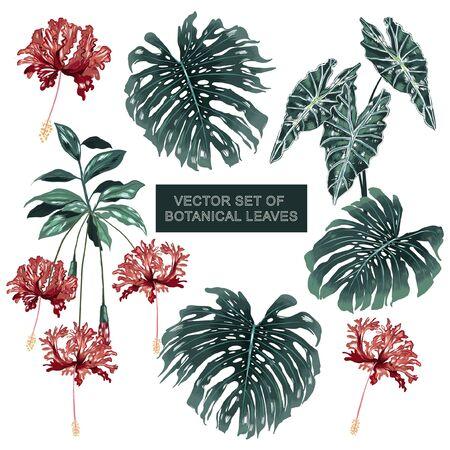 Conjunto de plantas botánicas y flor de hibisco exótica, hojas de monstera en vector diseño dibujado a mano sobre fondo blanco Ilustración de vector