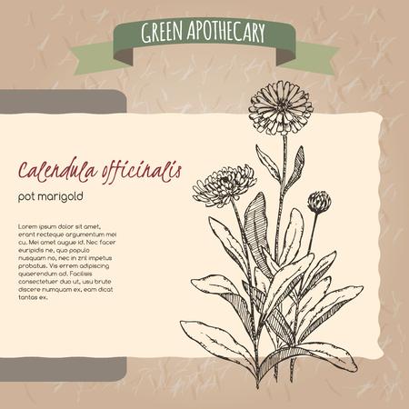 Calendula officinalis aka Ringelblume Skizze. Grüne Apothekers Serie. Groß für die traditionelle Medizin oder Gartenarbeit. Vektorgrafik
