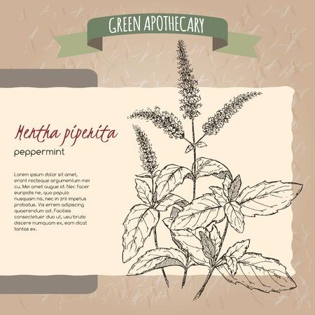 ペパーミントのスケッチは元の手漉き紙背景テクスチャに配置されます。緑薬剤師シリーズ。素晴らしい伝統やアーユルヴェーダ医学デザイン。