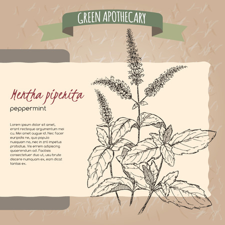 apothecary: Peppermint sketch placed on original handmade paper background texture. Green apothecary series. Great for traditional or Ayurvedic medicine design.