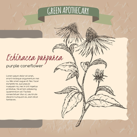 green paper: Echinacea aka purple coneflower  sketch placed on original handmade paper background texture. Green apothecary series. Great for traditional or Ayurvedic medicine design. Illustration
