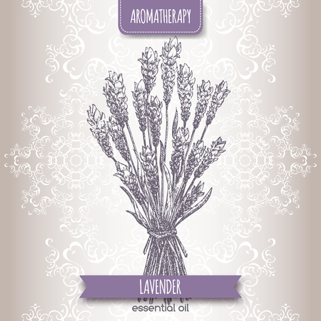 lavender: Lavandula angustifolia aka common lavender sketch on elegant lace background. Aromatherapy series. Great for traditional medicine, perfume design or gardening. Illustration