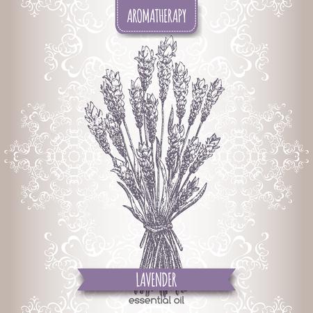 Lavandula angustifolia aka common lavender sketch on elegant lace background. Aromatherapy series. Great for traditional medicine, perfume design or gardening. Illustration