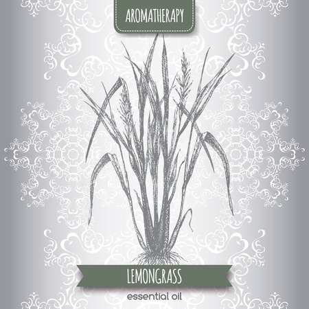 lemon grass: Cymbopogon aka lemongrass sketch on elegant lace background. Aromatherapy series. Great for traditional medicine, perfume design, cooking or gardening.