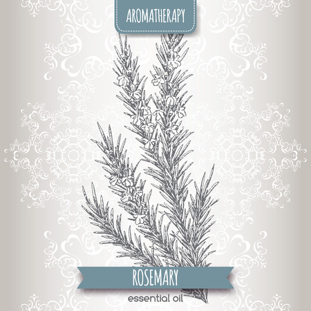 Rosmarinus officinalis aka rosemary sketch on elegant lace background. Aromatherapy series. Great for traditional medicine, perfume design, cooking or gardening.