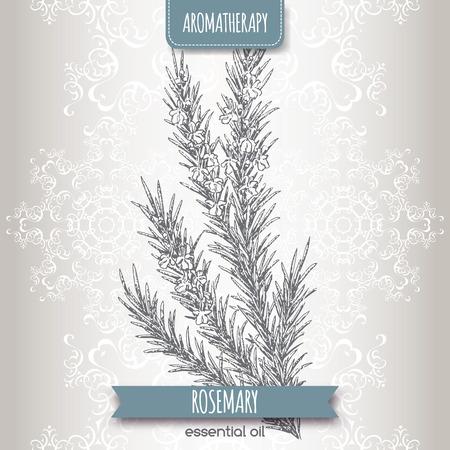 Rosmarinus officinalis aka rosmarino schizzo su sfondo elegante pizzo. Serie aromaterapia. Grande per la medicina tradizionale, disegno del profumo, la cucina o il giardinaggio.