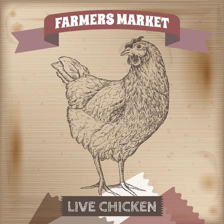 granjero: mercado de los granjeros etiqueta de la vendimia con pollo vivo. Colocado en la textura de madera. Incluye elementos dibujados a mano. Vectores