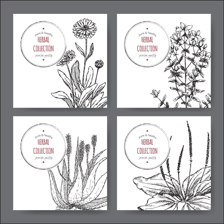 calendula: Set of 4 vector herbal tea labels with calendula, saint john wort, aloe vera and plantago hand drawn sketch. Placed on white background.