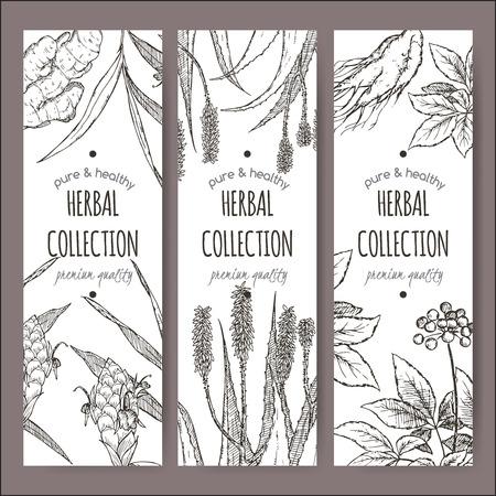 jelly beans: Conjunto de tres vectores de etiquetas de té de hierbas con jengibre, aloe boceto dibujado a mano y el ginseng. Colocado en el fondo blanco. Vectores