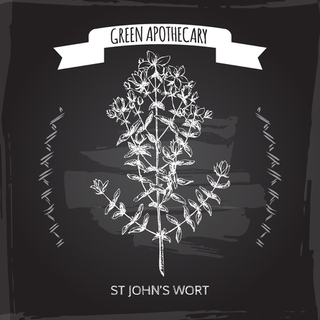 wort: Hypericum perforatum aka common Saint John wort sketch on blackboard background. Green apothecary series. Great for traditional medicine, gardening or cooking design.
