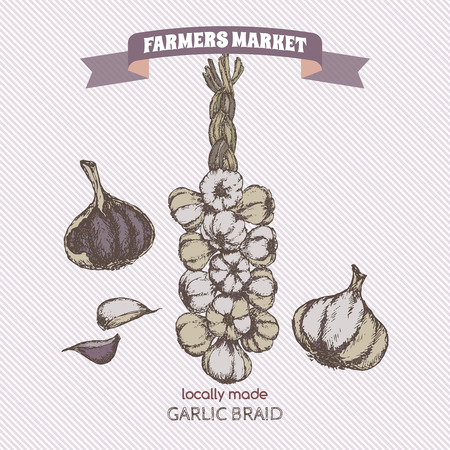 Color vintage garlic braid template. Farmers market series. Great for markets, grocery stores, organic shops, food label design.